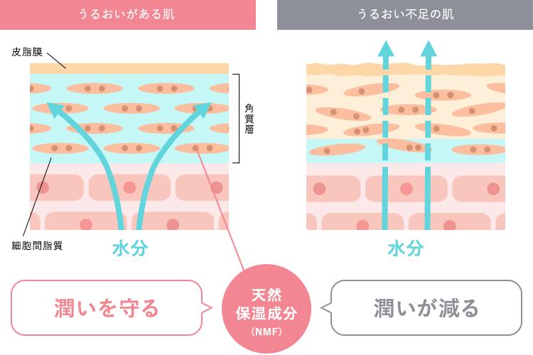 肌のバリア機能の図解