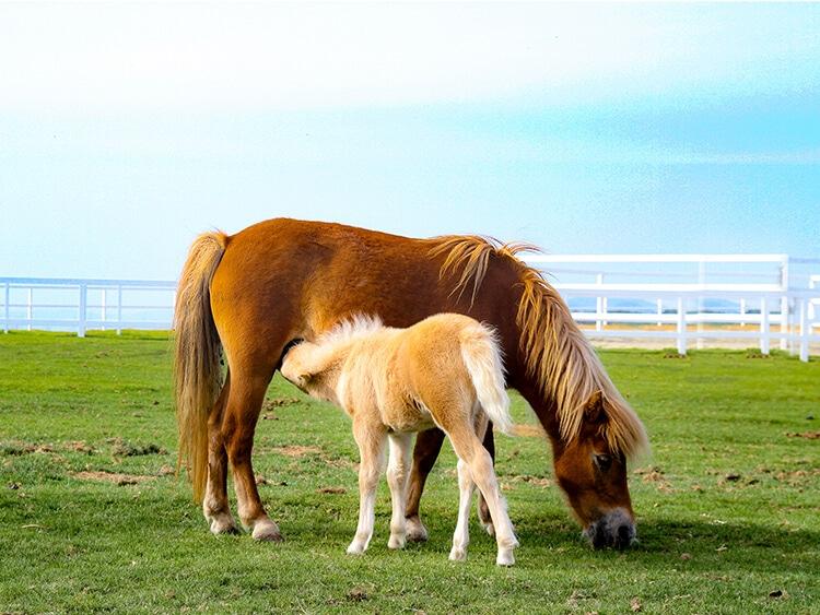 馬のイメージ