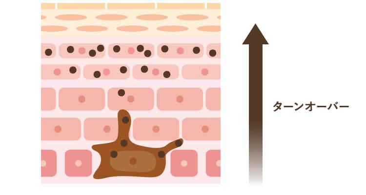 ターンオーバーのイメージ図