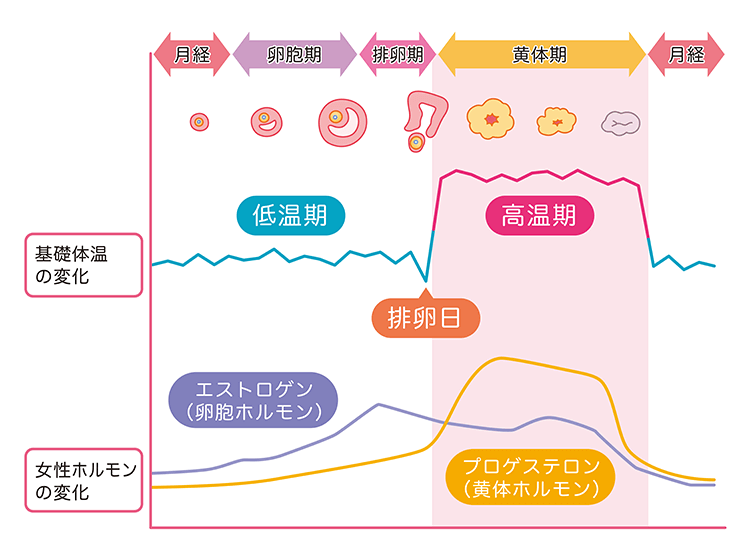 ホルモンバランスと基礎体温のグラフ