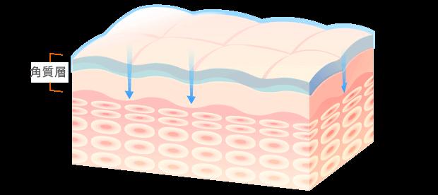 乾燥などの外部刺激をブロック