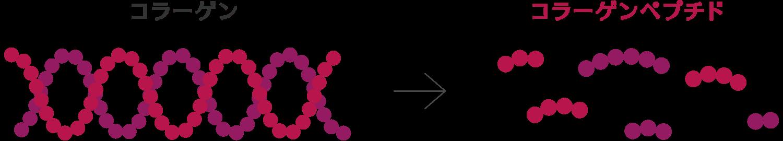 コラーゲン⇒コラーゲンペプチド